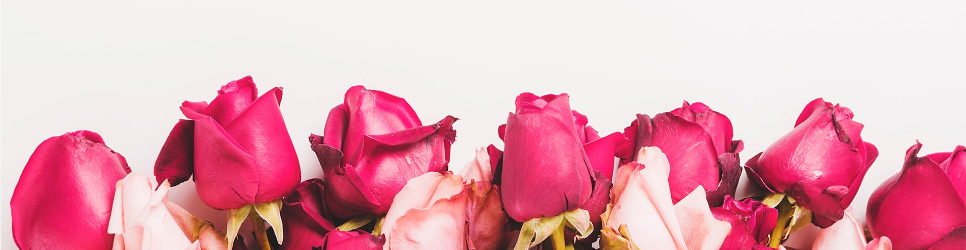 kwiaciarnia mercedes kwiaty